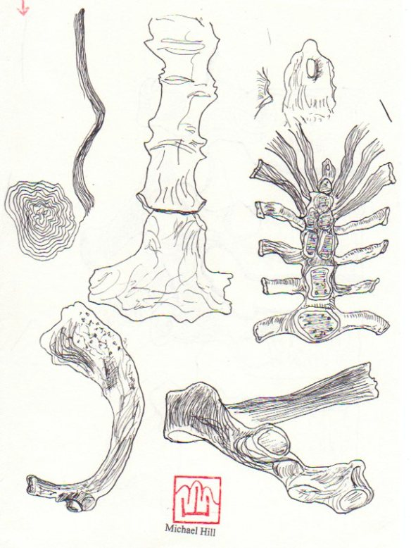 More bones (pen and ink drawing-© 2012 Michael Hill)