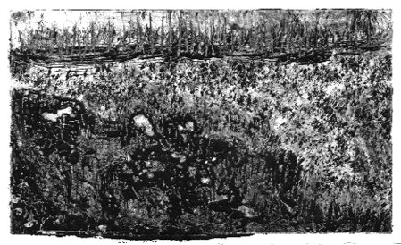 Dark glade-second impression. (Monoprint-© 2008 Michael Hill)